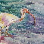 Sherry_Panico_Fishing Ibis